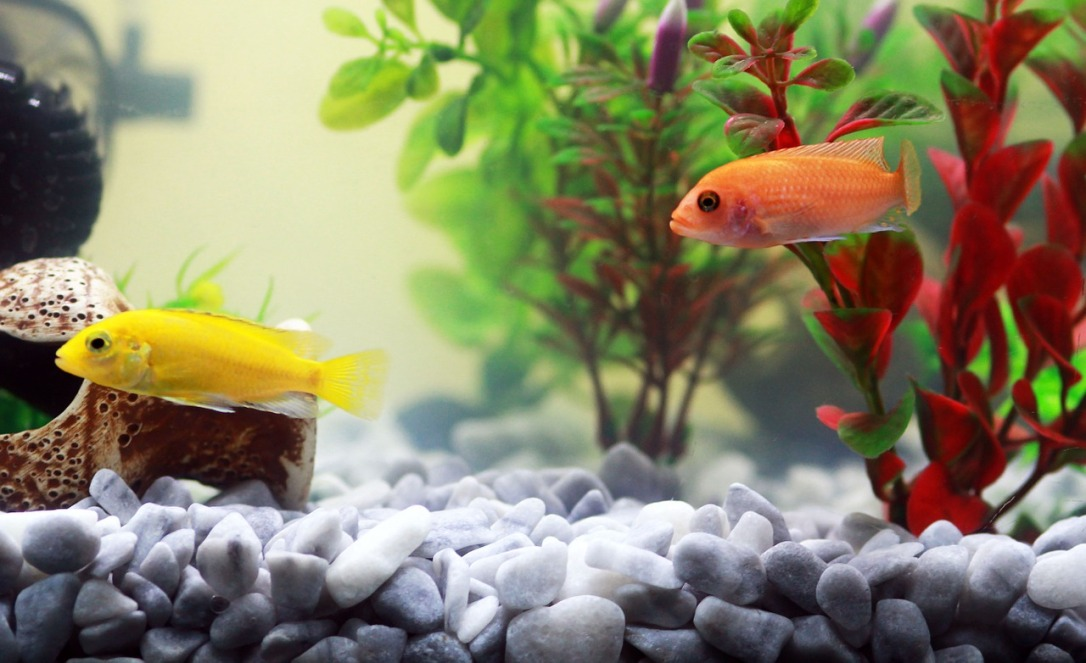 """Aquarium Water Element How To Create A """"Naturally"""" Beautiful Space"""