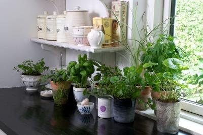 Herbs In Kitchen Photo by BrianHolm freedigitalphots.com