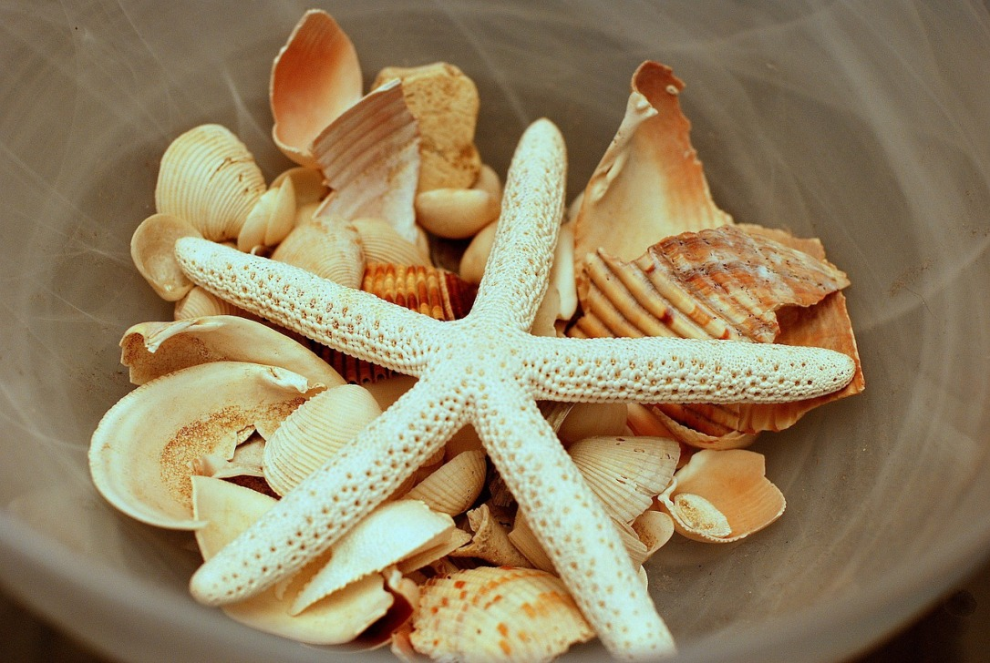 "Sea Shells How To Create A ""Naturally"" Beautiful Space"