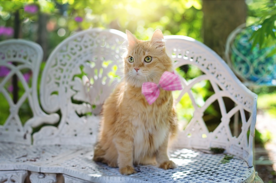Pet Bow 10 Great Mother's Day Gifts for Mom's in Senior Living #mothersday #gifts #seniors #cookies #cat #bow