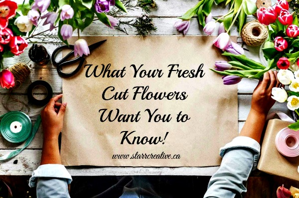 Tips & Care of Fresh Cut Flowers #flowerarrangement#freshflowers #flowerarrangement #florist #tips #entertaining #centerpieces #weddings #vase