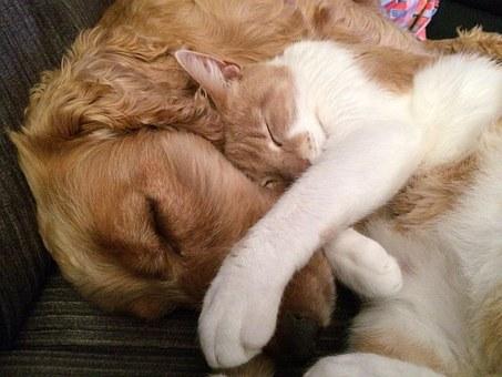 Puppy Love on Valentines Day #Valentines #Puppy #Love